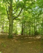 Skogens tempel